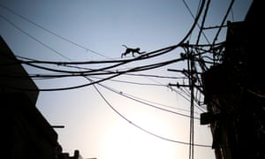 Another moment of monkey magic: it's not why did the monkey cross the road but how? Scrambling across electric cables this little fellow avoids the dangers of negotiating the traffic in New Delhi, India.