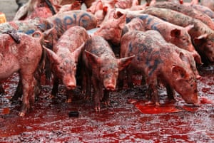 Happy as a pig in blood? Piglets and pig's blood are used to make a point during a protest in Nairobi. Kenyan police in riot gear fired teargas and water cannon on Tuesday to disperse about 200 protesters gathered outside parliament to demonstrate against lawmakers' salary demands. The words written on the pigs are the names of the legislators.
