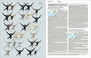 Primates of the World: Inside display