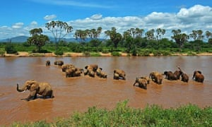 Elephants are pictured crossing the Ewas