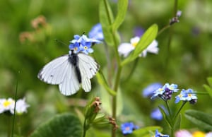 Week in wildlife: A butterfly sits on a flower on May 15,