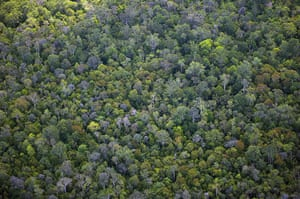 Week in wildlife: Tropical forest in the Central Kalimantan province, Borneo, Indonesia