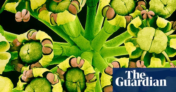 The invisible beauty of flowers - in pictures