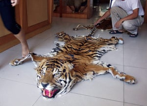 Greater Mekong: Tiger Trade in Myanmar and Thailand
