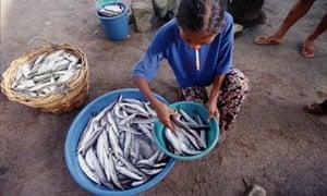 Early morning fish market, Port Barton, Palawan, Philippines