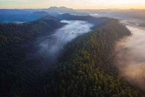Tarkine region: Huskisson wilderness, Tarkine