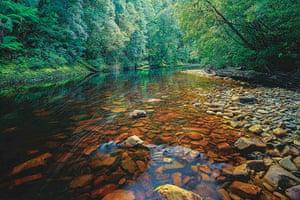 Tarkine region: Tarkine rainforest wilderness