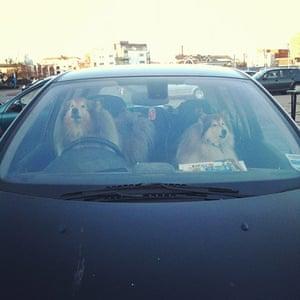 Pets meet technology: dogs in car