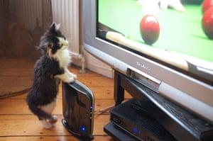 Pets meet technology: kitten watching television