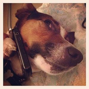 Pets meet technology: dog on phone