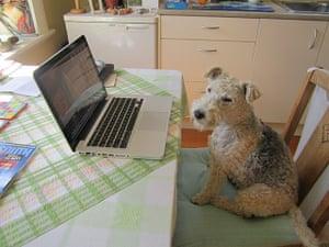 Pets meet technology: dog and macbook