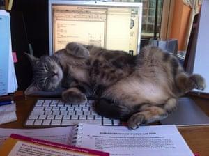 Pets meet technology: cat on keyboard