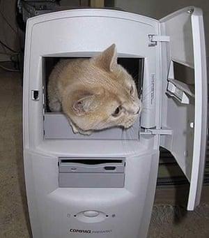 Pets meet technology: cat in computer