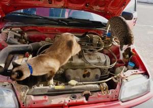 Pets meet technology: cats in car