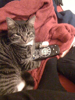 Pets meet technology: cat with remote