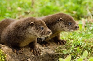The State of Nature: Otter