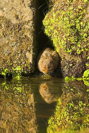 The State of Nature: Water vole