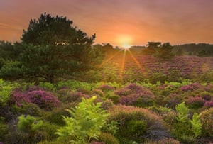 The State of Nature: heathland