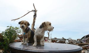 Two frightened and apparently lost dogs sit on a coffee table top in a destroyed neighborhood.