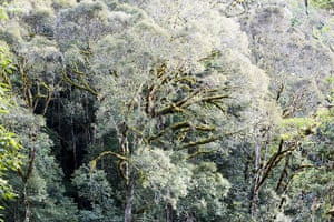 World Biodiversity Day: Indonesia reef and forests : Forest in Papua