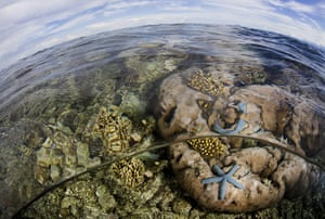 World Biodiversity Day: Indonesia reef and forests : Pristine Reefs in Cenderawasih Bay