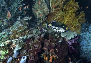 World Biodiversity Day: Indonesia reef and forests : Coral Reef at Dampier Straight Raja Ampat