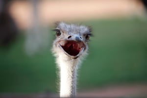 24 hours in pictures: A Red-necked Ostrich