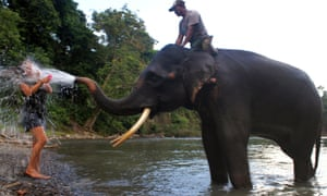 Take that: A Sumatran elephant splashes water on a tourist as elephants are bathed in Tangkahan river, located in Leuser National Park on Indonesia's Sumatra island.