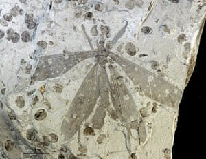 2013 ASU top 10: Juracimbrophlebia ginkgofolia