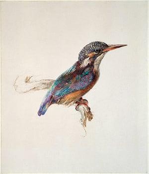 Old master drawings: John Ruskin (1819-1900), Study of a Kingfisher
