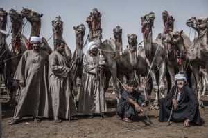 Egyptian vendors present their animals on a camel market in Birqash, 40 kilometers north of Cairo. Hundreds of camels are brought in from Sudan and Somalia to be sold on Egypt's largest camel market every Friday.