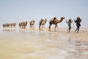 FTA: Siegfried Modola : A camel caravan carrying slabs of salt travels away from the Danakil Depres