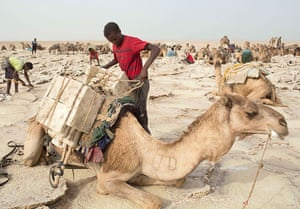 FTA: Siegfried Modola : A worker loads a camel with slabs of salt