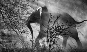 Elephants exterminated 40,000 years ago