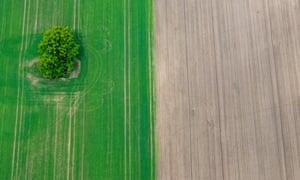 Crop rotation: an aerial view of a field near Eisenhuettenstadt, Germany