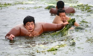 Members of the local water authority clear overgrown weeds in the Haihe river, China. For some reason these officers turned down the traditional, practical lifejacket and opted for some sort of ungainly, inflatable Sumo-style suit, much to the amusement of onlookers