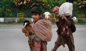 Kashmiri Bakarwal nomads walk as they carry goats on their backs on the outskirts of Srinagar, India. Bakarwals are nomadic herders in Jammu Kashmir state, who wander in search of good pastures for their cattle.