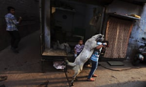 More goats today: a goat jumps on to the back of a young boy in an alleyway in New Delhi, India.