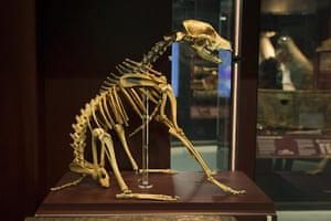 New Mary Rose museum: Mary Rose museum