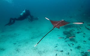Galapagos island: Catlin Seaview Survey  underwater