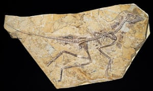 Fossil of early bird Aurornis xui