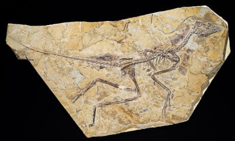 Early bird called Dawn beat Archaeopteryx to worm by 10m years