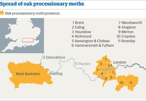 Oak moth map