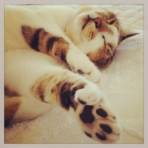 Hemingway was very superstitious and liked to keep six-toed cats for luck.