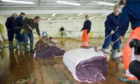 Icelandic whalers cut up a fin whale on board a boat owned by Hvalur which exports the meat to Japan