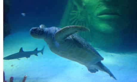 Ernie turtle sea life manchester