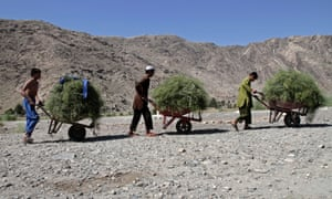 Afghan boys push handcarts to their homes in the Khewa district of Jalalabad, east of Kabul, Afghanistan. Photograph: Rahmat Gul/AP