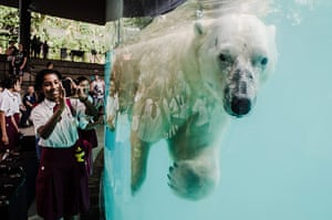 20 Photos: the launch of Frozen Tundra at Singapore zoo