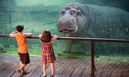 Valencia's Friendly Hippo
