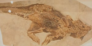 Preserved Dinosaur Skin